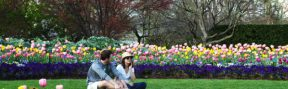 Top 10 Things to Do This Spring in DFW